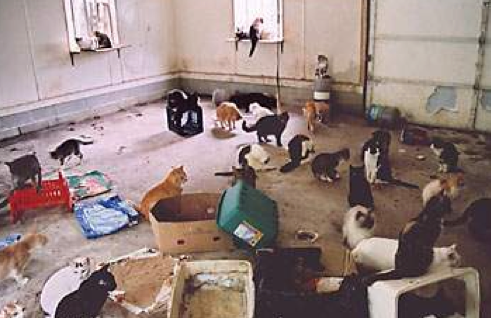 too_many_cats_in_house_-_Google_Search.png